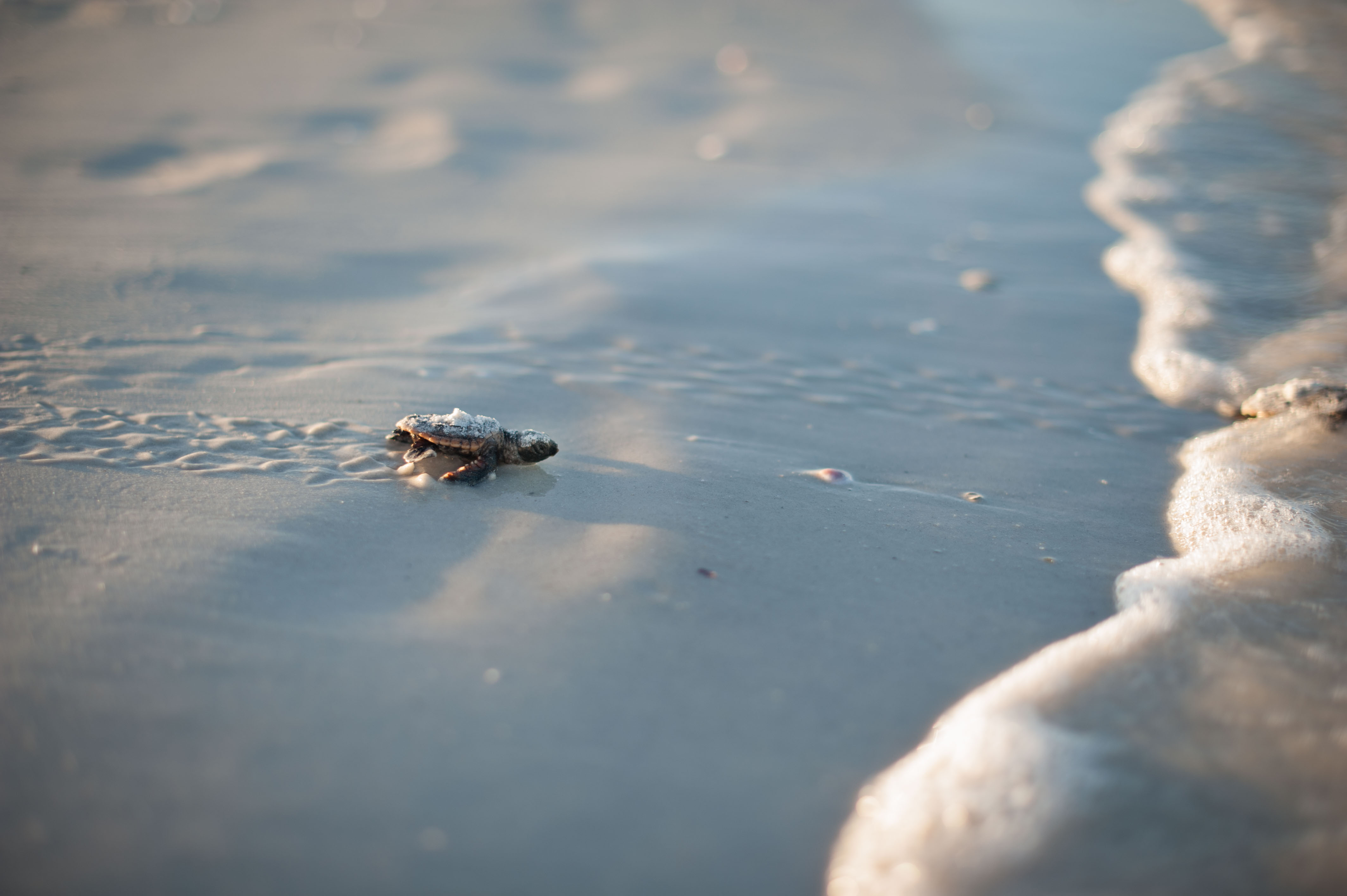 Sea Turtle Trackers Home page